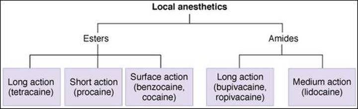 Local anesthetics types